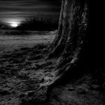 New Poetry – 'The Estranged'