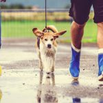 How to get your dog fix in college