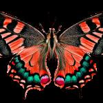 Creative Corner: The Fleeting Butterfly